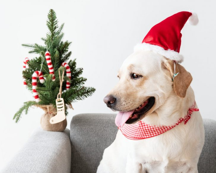 pet gifts, dog, cat, Christmas