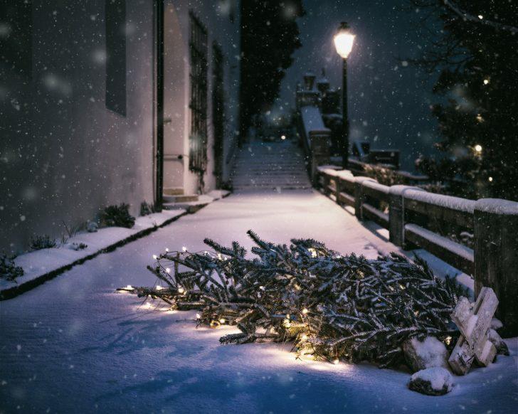 real christmas tree, dispose, wood