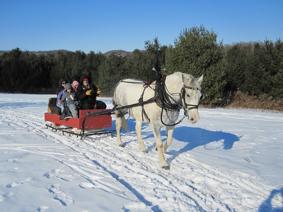 Why You Need to Go on a Sleigh Ride This Winter