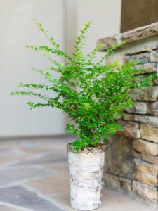 Winter porch plants, cold, plants