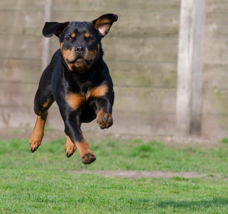 dog kennel, dog kennels, dog crate, petco dog crate, kennel, dog cage, petco crates, kennels, petco dog kennels, large dog crate, petco kennels, petco dog cages , petsmart dog crates, large dog kennel, pet crate, dog travel crate, petsmart dog kennels, pet kennels, petsmart dog cages, petsmart crates, small dog kennel, pet cage, portable dog kennels, petsmart kennel, puppy cage, tractor supply dog kennel, dog kennels for sale, outdoor dog kennel, tractor supply dog pens, dog pen, large outdoor dog kennel, tractor supply kennel, outside dog kennels, indoor dog kennels, chewy dog crates, indoor dog pen