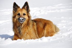 protect your dog, Winter, cold