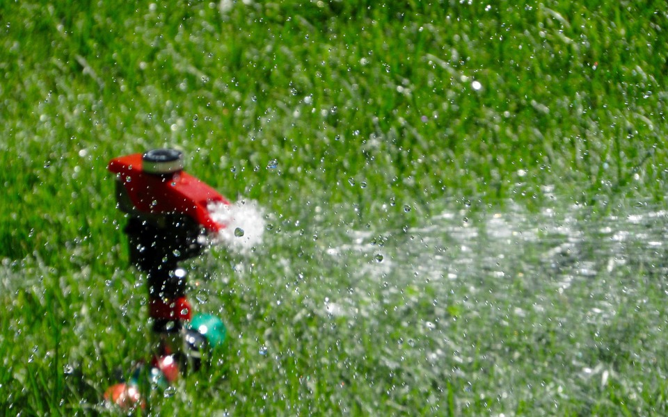 lawn, lawn care