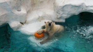 unusual Winter activities, fun, family