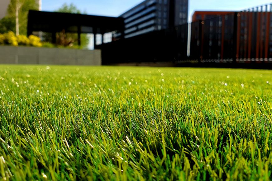 lawn full of green grass
