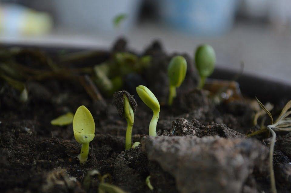seeds grown up