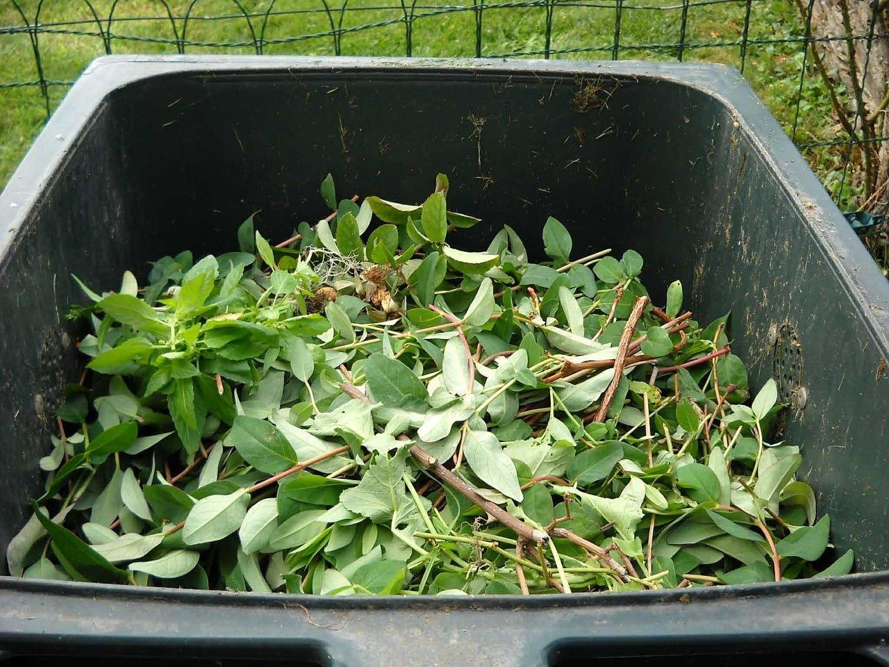 leaves inside te bins