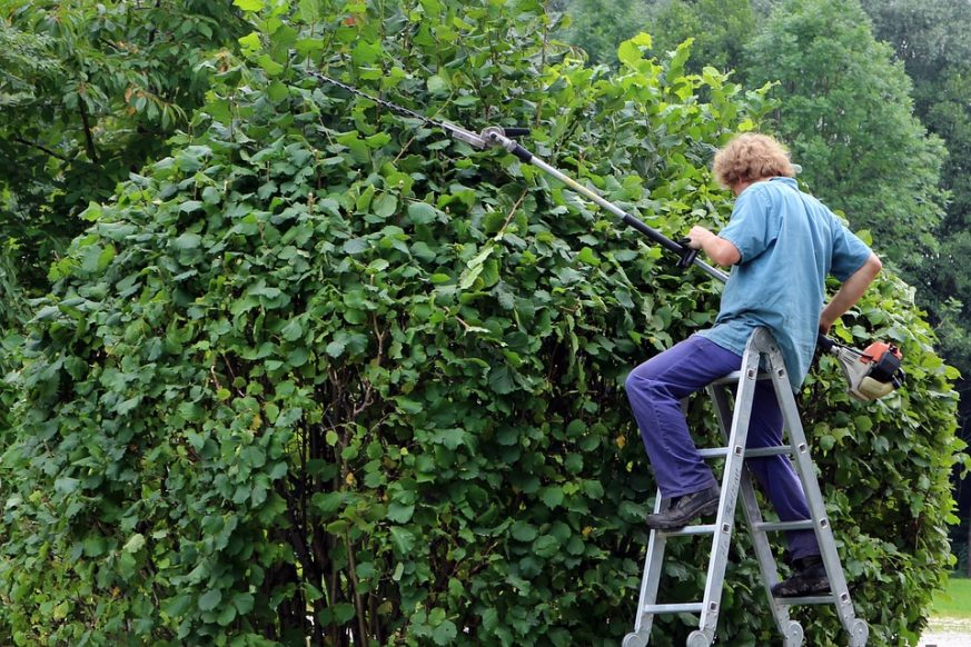 person trimming plant